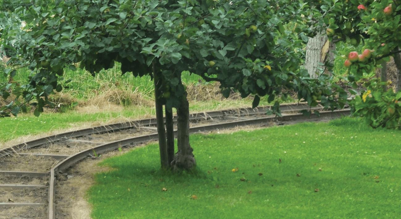טעם העץ הוא המילה לסכר טעם העץ הוא המילה לסכר טעם העץ הוא המילה ל